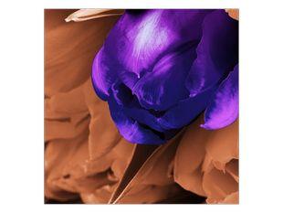 Ležící tulipán