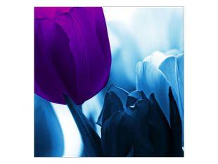 Tulipány v modrém kabátě