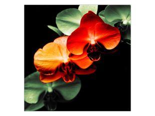 Krvavá orchidej