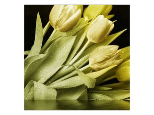 Kytice bledých tulipánů