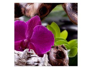 Orchidej na dřívku