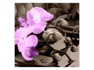 Vzpomínky na orchidej