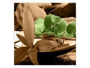 Zelené orchideje