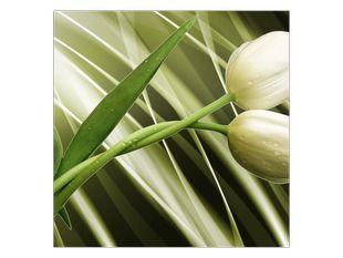 Sváteční tulipány