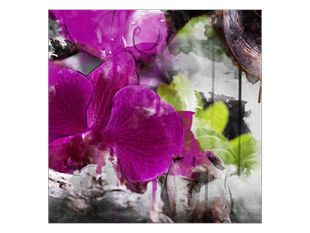 Malovaná orchidej
