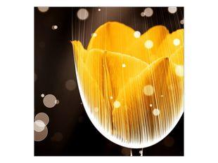 Žlutý květ tulipánu