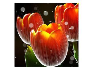 Osvětlené tulipány