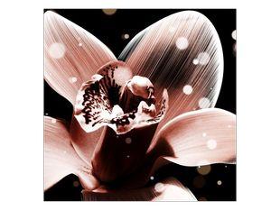 Roztoužená orchidej