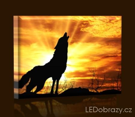 Vlk při západu slunce