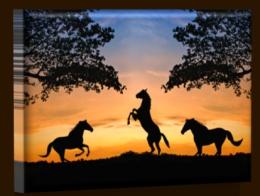 Koně při západu slunce