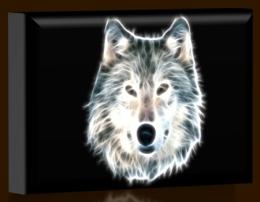 Šedý vlk