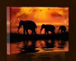 Sloní rodinka