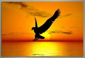 Orel při západu slunce